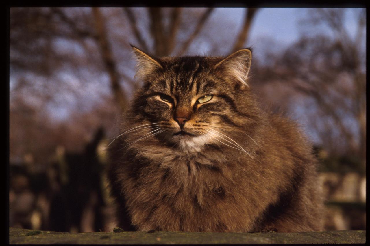 Furry Cat Cat