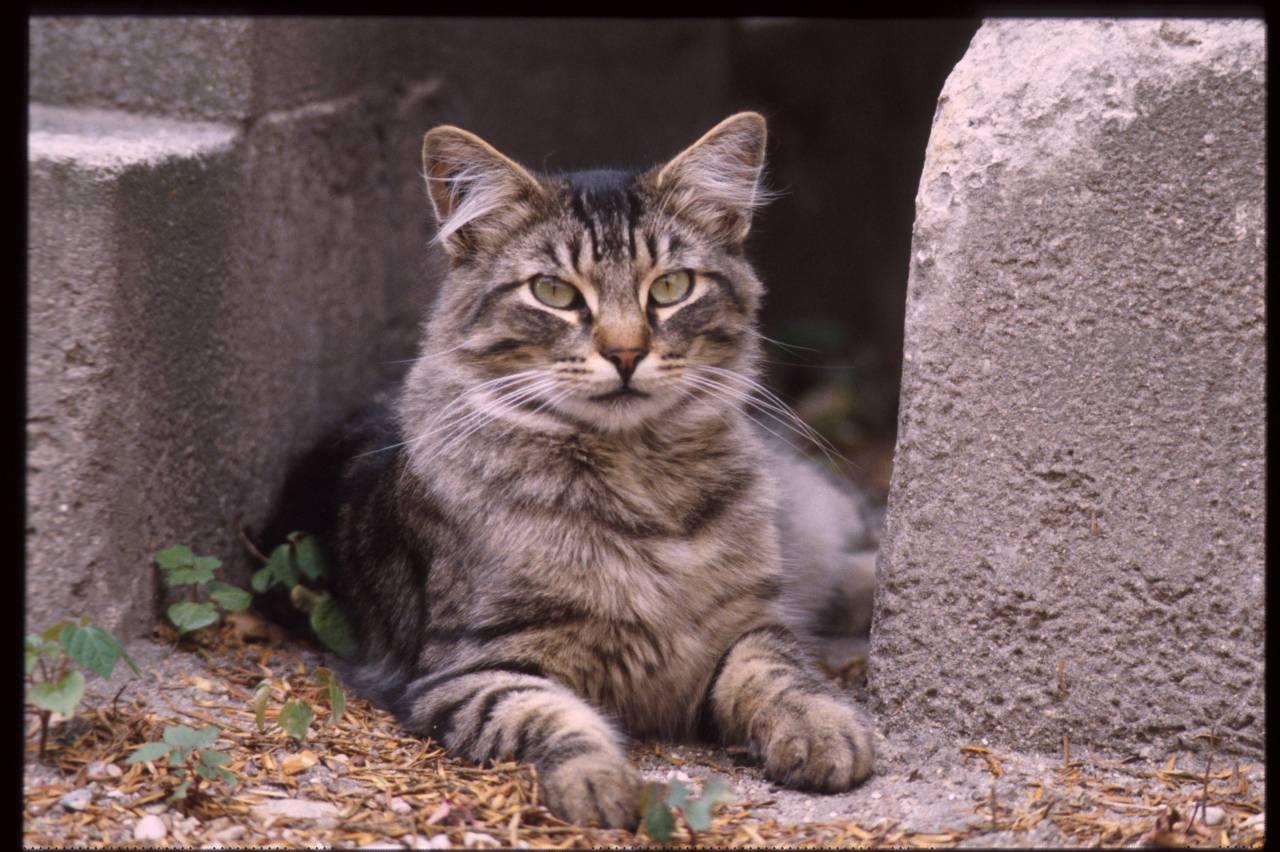 Фурри кошки 18 11 фотография
