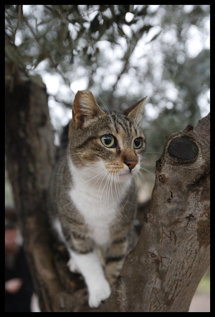 Pictures Of Cats Org