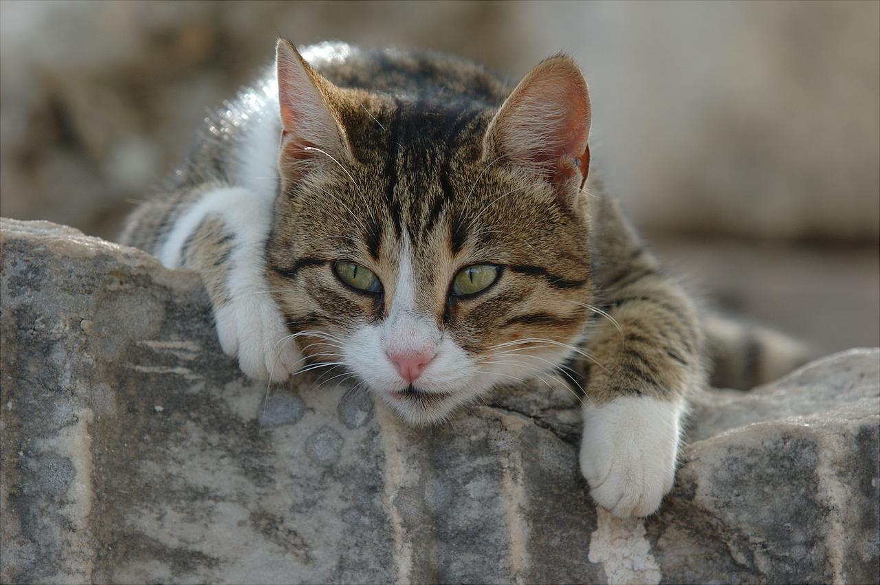 Sanatçılar en çok KEDİ sever - Kedi Resimleri (1. Katalog)