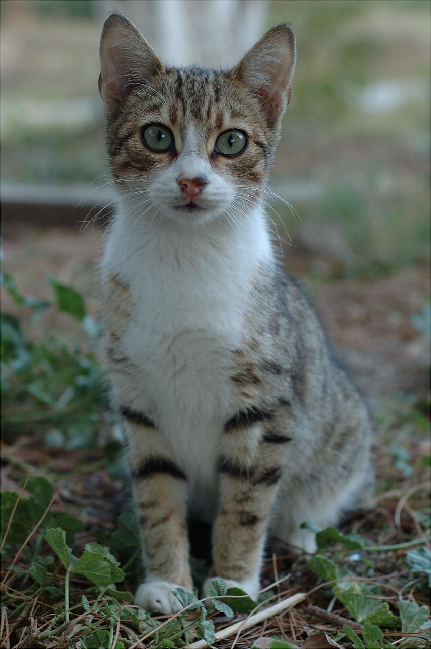 Auraclan cats - Page 3 DSC_3390
